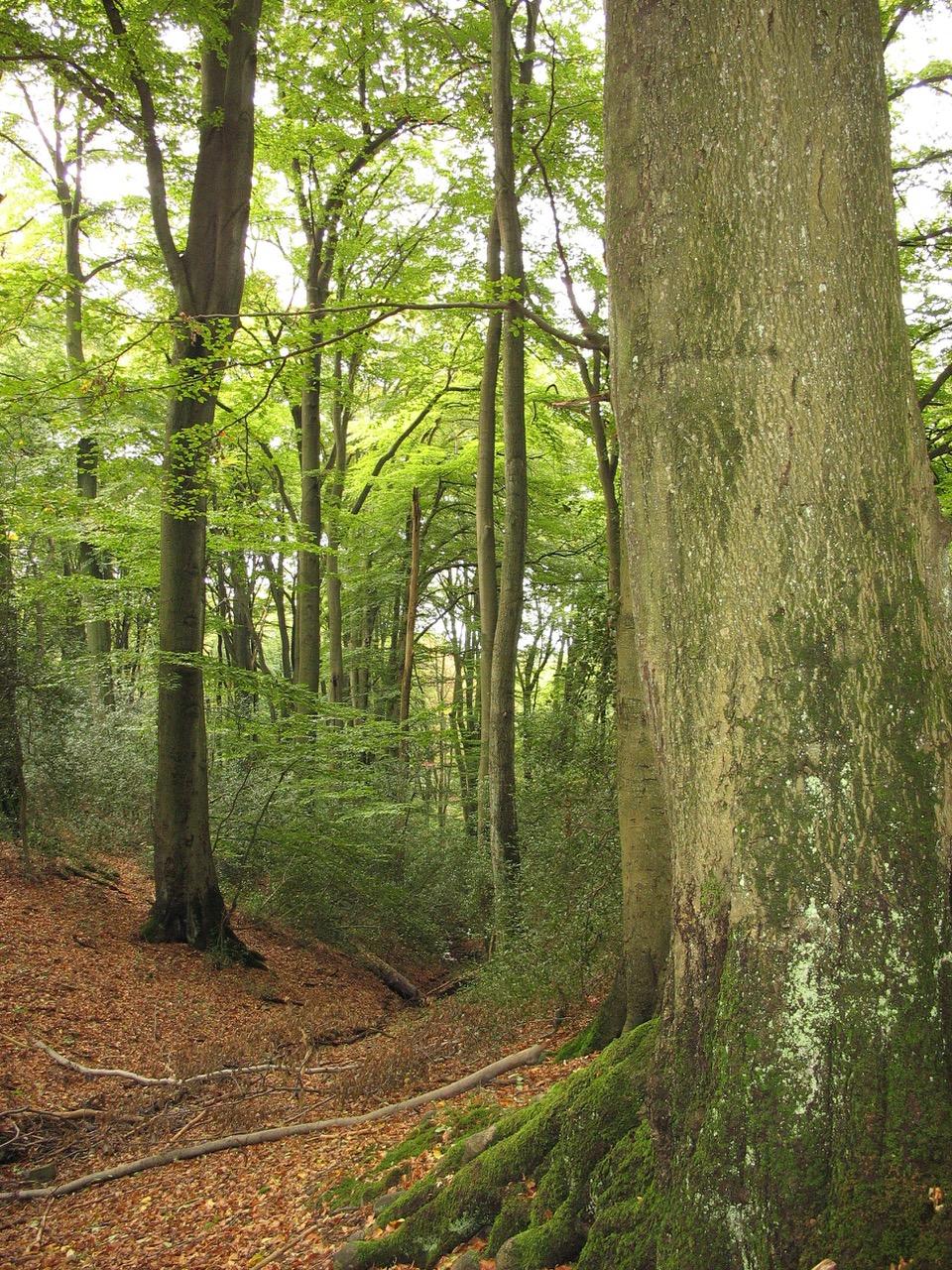 Waldkongress: 02.10.-03.10.2019 Info/Anmeldung: Klick auf Bild